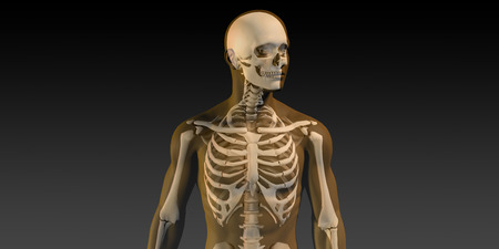 visible: Human Anatomy with Visible Skeleton and Muscles Art