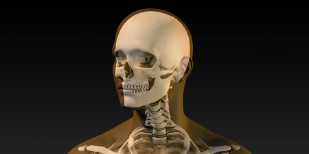 Medical Illustration of Human Body and Bones as Art