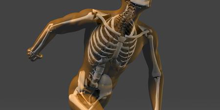 radiogram: Human Body and Skeleton Anatomy Xray Concept
