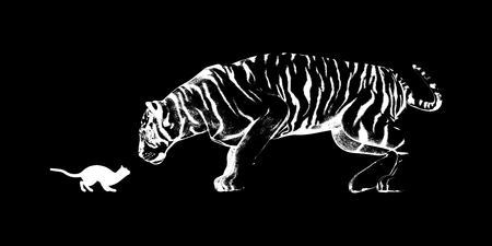 inner strength: Cat Challenging a Tiger Ready to Fight or Take On