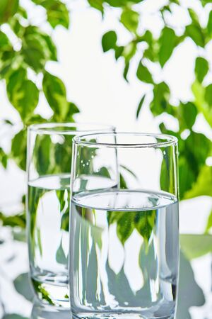 Two glasses of water on a green natural background Imagens