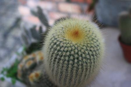 closeup: Close up of cactus Stock Photo