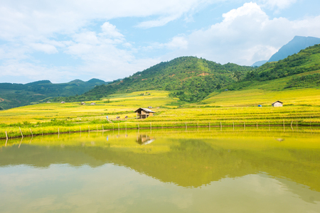 YU, SAPA, LAO CAI - September 2, 2017: rice ripe on terraced fields, rice farmers in Lao Cai, North of Vietnam