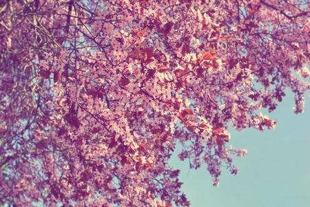 Pink plum tree flower with a blue sky background