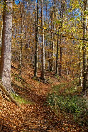 Beautiful sunny autumn landscape with blue sky
