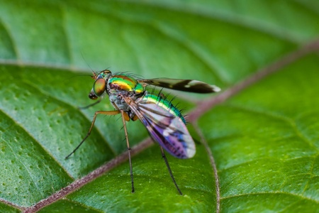 long legged: Macro photography showing a close up view of long legged fly Stock Photo