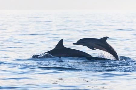 Vacaciones en Bali, Indonesia - Dolphin Beach Lovina, delfín que salta