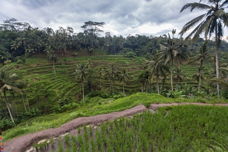 beautiful location: Holiday in Bali, Indonesia - Tegallalang Rice Terrace