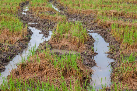 pit fall: Harvested wet farm texture for blur background
