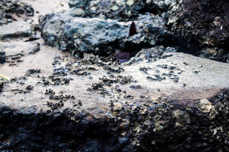Close of view of real oyster on top muddy rock by the shore Stockfoto - 122904552