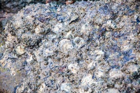 Close of view of real oyster on top muddy rock by the shore Stockfoto - 122927128