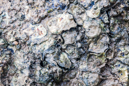 Close of view of real oyster on top muddy rock by the shore Stockfoto - 122927129