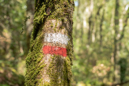 Grand Route trail sign on oak tree at Belelle river, The Chapel, Galicia