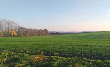 Green field in czech countryside in autumn season Foto de archivo