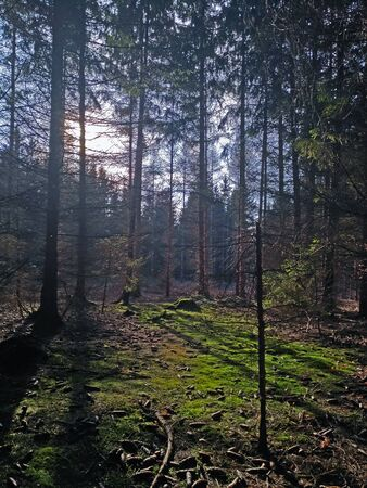 Photo of deep forest with sunlight and shadow in czech republic nature Foto de archivo