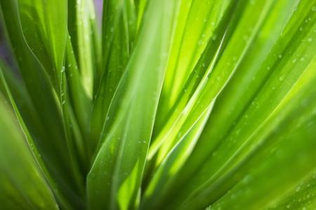 yeşillik: Bir yeşil yaprak arka plan Stok Fotoğraf