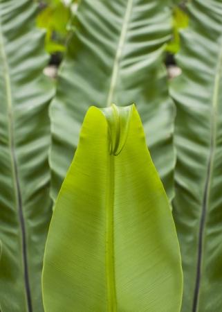 nervure: fern growing up
