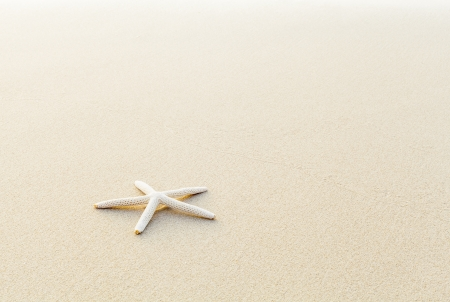 Beautiful starfish on the beach