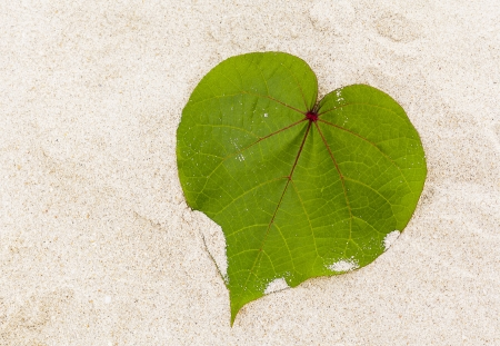 Leaf in shape of heart on the beach  photo
