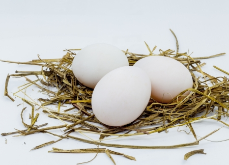 Chicken eggs in the nest of straw  photo