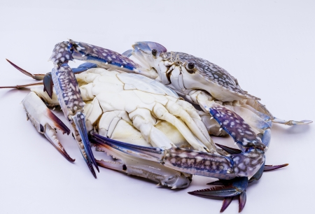 blue swimmer crab: Fresh blue swimmer crab