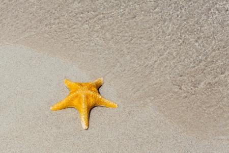 Beautiful shellfish on the tropical beach. photo
