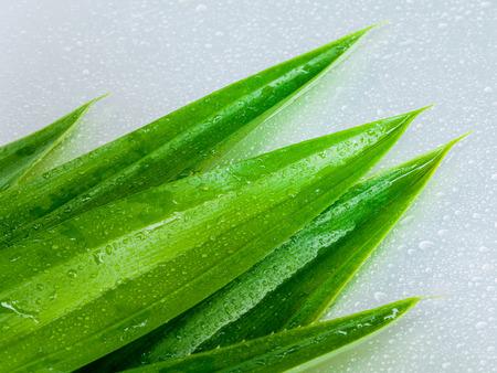 pandanus: Thai herbal ingredient spas pandanus leaf. - sweet and earthy aroma .