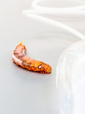 malicious: Malicious computer worm . - Concept for data security. Stock Photo