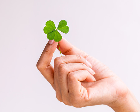 goodness: The girl hold  Clover leaf . - Concept for love , hope and goodness. Stock Photo