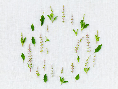 The circle of holy basil leaf and flower.