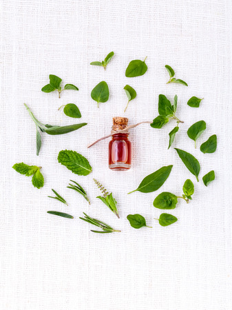 Bottle of essential oil with herb holy basil leaf, rosemary,oregano, sage,basil and mint on white background. Фото со стока - 40107648
