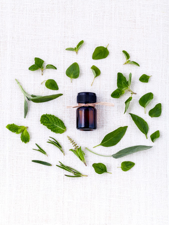 Bottle of essential oil with herb holy basil leaf rosemaryoregano sagebasil and mint on white background.