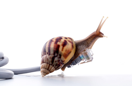 internet  broadband: Snail with rj45 connector symbolic photo for slow internet connection. broadband connection is not available everywhere.
