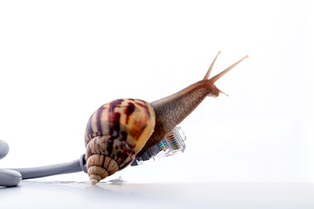 snails: Snail with rj45 connector symbolic photo for slow internet connection. broadband connection is not available everywhere.