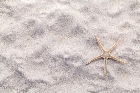 Conchiglie, stelle marine e granchi sulla spiaggia di sabbia per l'estate e spiaggia concetto. Studio girato spiaggia di fondo. Archivio Fotografico - 45320451