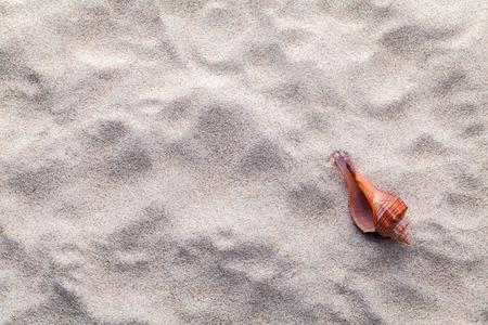 Schelpen, zeesterren en krab op strandzand voor de zomer en het strand concept. Studio opname strand achtergrond.