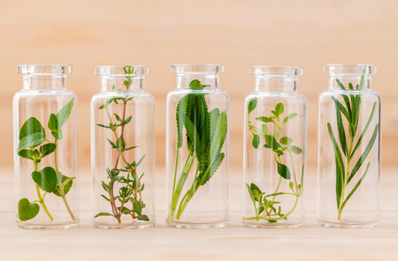Bottle of essential oil lemon thyme ,thyme ,oregano,rosemary and sage leaf on wooden background. Banque d'images