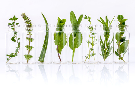 흰색 배경에 허브 거룩한 바질 잎, 로즈마리, 오레가노, 세이지, 알로에 베라와 민트 에센셜 오일의 병입니다.