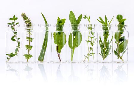 Flesje etherische olie met kruid heilige basilicum blad, rozemarijn, oregano, salie, aloë vera en munt op een witte achtergrond.