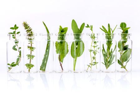 aceites: Botella de aceite esencial con hierba sagrada hoja de albahaca, romero, or�gano, salvia, albahaca y menta en el fondo blanco. Foto de archivo