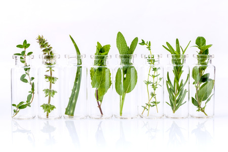 aromatherapy oils: Bottle of essential oil with herb holy basil leaf, rosemary,oregano, sage,basil and mint on white background.