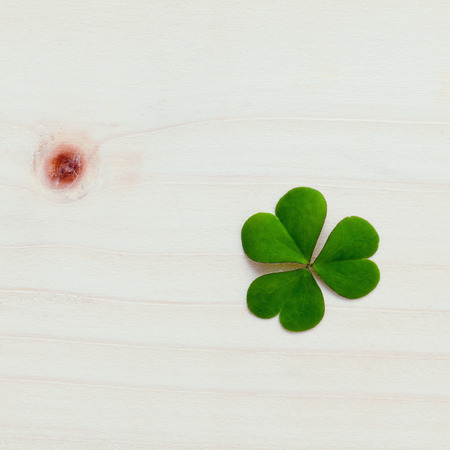 luckiness: Closeup clovers leaves  setup on wooden background.