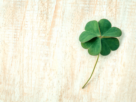 the good life: Closeup clovers leaves  setup on wooden background.