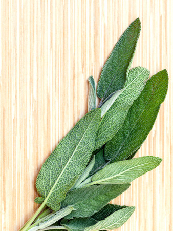 culinary: Alternative mediterranean medicinal plants Salvia officinalis or sage for medicinal and culinary use on wooden background.
