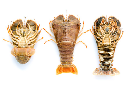 lobster tail: Flathead lobster, Lobster Moreton Bay bug, Oriental flathead lobster isolate on white background. Stock Photo