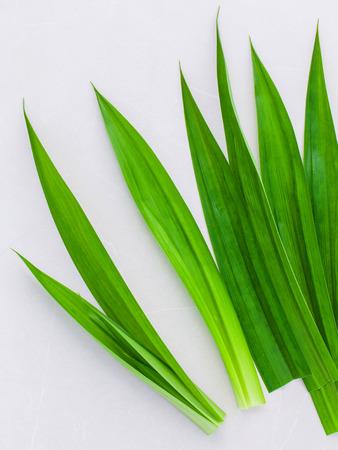 pandanus: Thai herbal ingredient for thai dessert and spas aromatherapy pandanus leaf,sweet and earthy aroma .