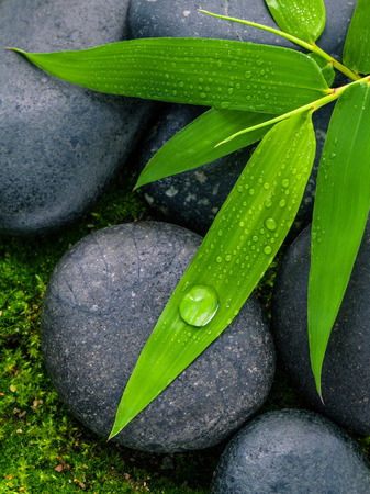 zen like: The River Stones spa treatment scene and bamboo leaves with raindrop zen like concepts.
