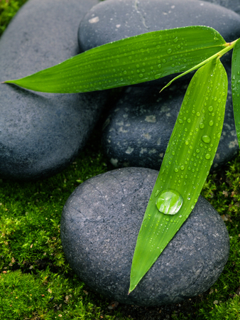 black stones: The River Stones spa treatment scene and bamboo leaves with raindrop zen like concepts.