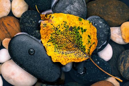 노란색 녹지대 강 돌 젠, 평화, 명상 개념에 떨어지는 나뭇잎. 스톡 콘텐츠