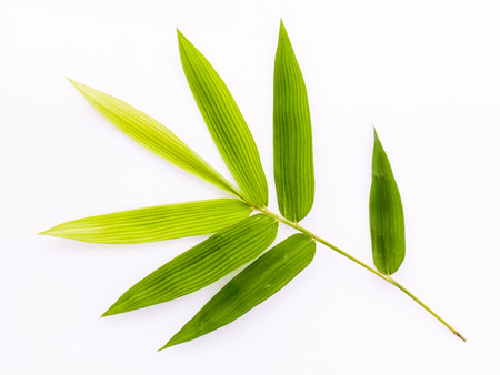 Fresh bamboo leaves border with water drop isolated on white background, botanical zen forest, tropical spa decoration, backdrop with copy space.